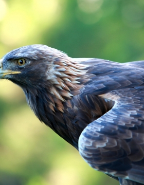 Hawk, by Shelly Prevost on Flickr